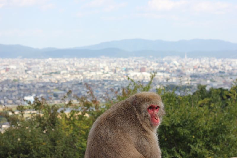 Kyoto_Bericht_5